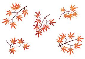 Set of Japanese Maple Leaves with Isolated on White Background vector