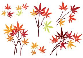 Set of Japanese Maple Leaves with Isolated on White Background