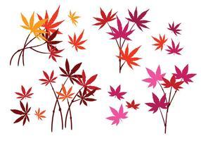 Conjunto de hojas de arce japonés con aislados sobre fondo blanco