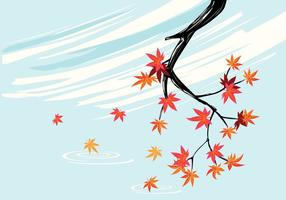 Smooth Japanese Maple Plant with Sky Background and Fall Maple Leaves