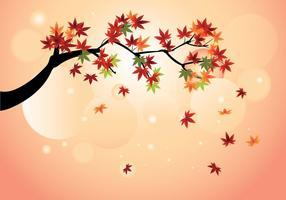 Suave, japonés, arce, otoño, arce, hojas, vector