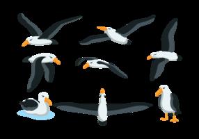 vettore di albatros