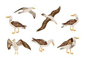 Vecteur albatros