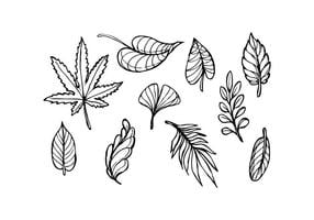 Leaf Sketch Icon Vector