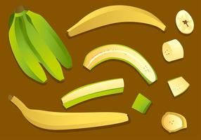 Plantain Set Gratis Vector