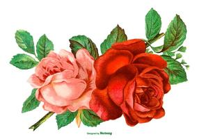 Vacker Vintage Rose Illustration