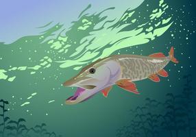 Muskie Fisch Vektor