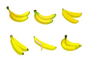 Plaintain Banana Fruit Vector Collection