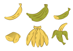 Handrawn plantain vector