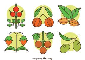 Kruid planten collectie vector