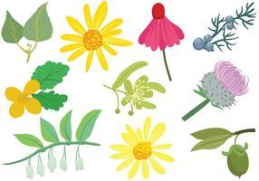 Vecteurs de plantes cosmétiques gratuites