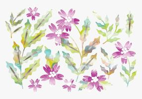 Conjunto de flores de aquarela vetorial