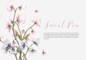 Sweat Pea Water Color Vector Background