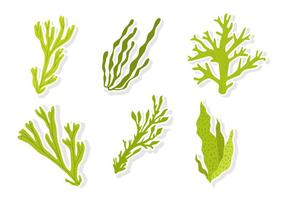 Green Sea Weed Vectors