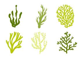 Sea Weed Vector Icono