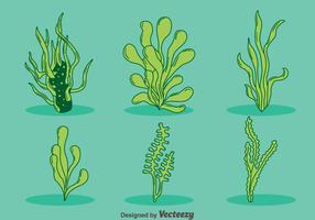 Vector desenhado mão da erva daninha do mar verde