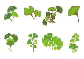Free Ginkgo Vector