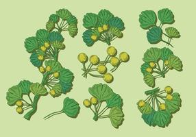 Ginkgo vector set