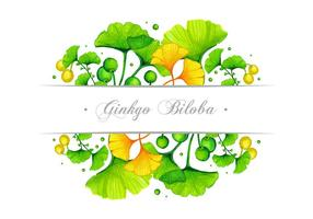Ginkgo Banner Vector Diseño