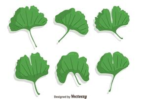 Green Ginkgo Leaf Vector