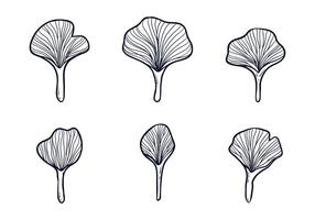 ginkgo leafes illustration