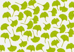 Ginkgo Leaf Background
