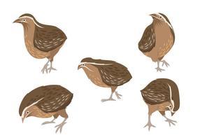 Set von Vektor-Grafik-Illustrationen von Wachteln
