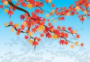 Japanska Maple Bakgrund