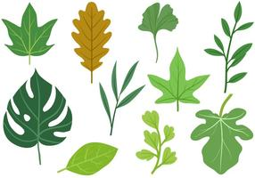 Free Leaves 2 Vectors