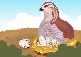 Codorniz, pájaro, huevos, vector