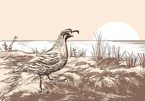 Male Quail Landscape Vector