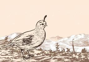Female Quail Vector Landscape