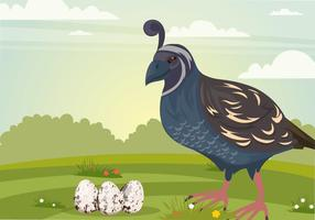 Mama Quail Bird Con Los Huevos Vector