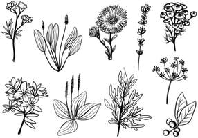 Vecteurs d'herbes médicinales gratuites vecteur