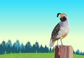 Quail Bird Vector On Post