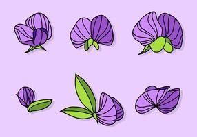 Vecteurs violets de pois sucrés