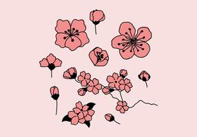 Pink Plum Blossoms vector