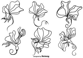 Vector Sweet Peas Flower Illustration