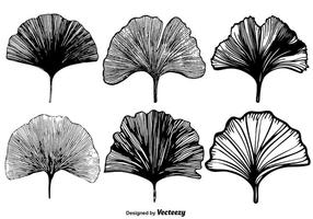 Vektor Gingko-Blatt-Set