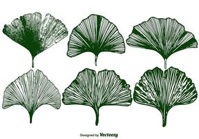 Vector Ensemble de feuilles de Gingko