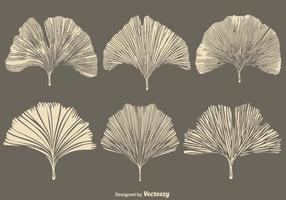 Vector Gingko Leaf - Set Flat Style