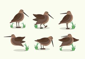 Snipe Bird Habitat Flat Illustration