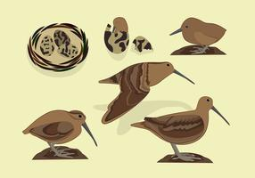 snipe bird free vector