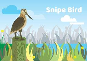 Snipe Bird Illustration