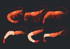 Crevettes crevettes Vector Collection