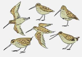 Snipe Illustration vectorielle dessinés à la main