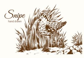 Handgetekende Snipe Bird