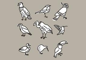 Set Of Different Kind Of Birds