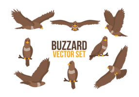 Buzzard Cartoons Vector