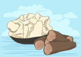 Vector Of Cassava Root With Cassava Crackers